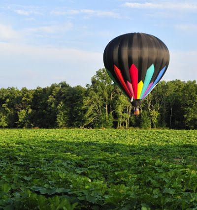 Hot Air Balloon aboveThe Pumpkin Field