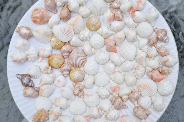 Gum Paste Sea Shells Tutorial