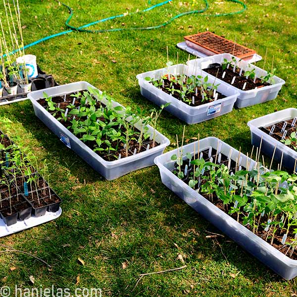 Containers with seedlings on a green grass.